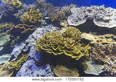 Colorful Coral Reef With Exotic Fishes