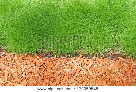 Healthy green grass and orange filings background