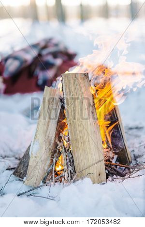 Burning wood in the fire in the winter forest