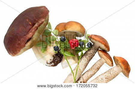Mushroom with bilberry and cowberries on a white background .