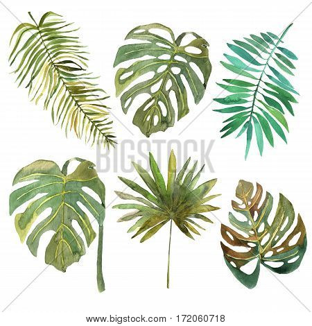 Floral set. Collection with tropical leafs hand drawn in watercolor. Design for invitation wedding or greeting cards.