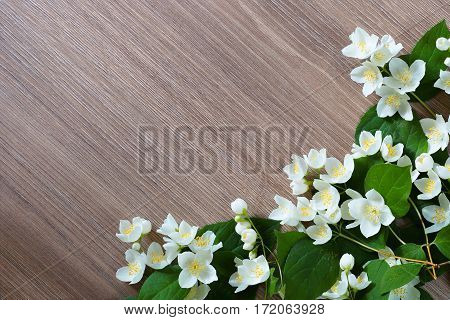 Branches blooming jasmine on a wooden background. Free space for text