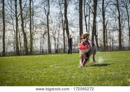 Dog Agility On Greenfield Exercises With Trainer