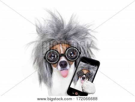Intelligent Smart  Dog Taking Selfie