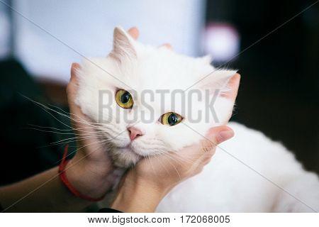 Portrait of very cute furry white cat