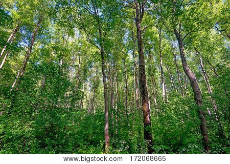 Sunlight in a green forest on summer day