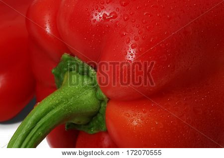 Close-up of red bell pepper on white background with dropes of water