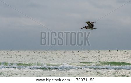 Pelican Glides Over Early Morning Surf in the Gulf Coast