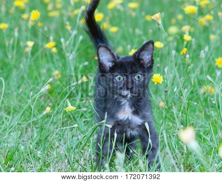 clumsy little kitten on the green grass