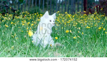 cute white fluffy cat in the meadow with flowers