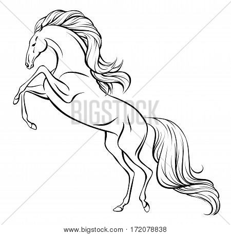 Outline vector drawing of a rearing horse with long mane and tail
