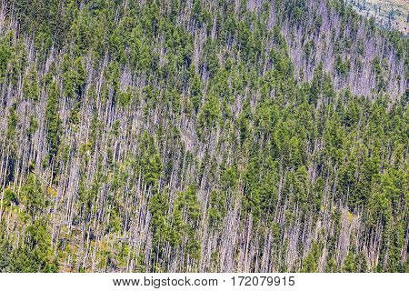 Aerial View Of Coniferous Forest In High Tatras Mountains