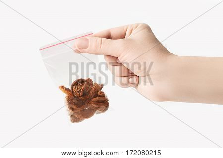 Hand holding Plastic transparent zipper bag with half home dried apricots isolated on white, Vacuum package mockup with red clip. Concept