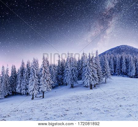 Dairy Star Trek in the winter woods. Dramatic and picturesque scene. Carpathian, Ukraine, Europe.