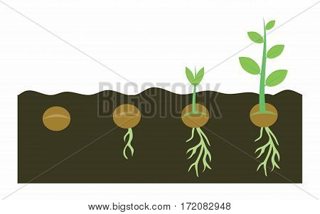 plants growing with planting process germination pea seeds in soil