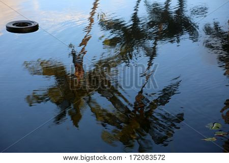 palm tree. palm trees refection in a fish pond on the island of maui Hawaii.