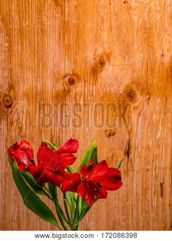 Alstroemeria on plain plywood background portrait orientationa