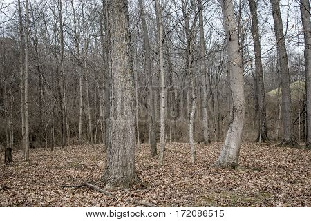 Beautiful natural background with deciduous trees and fallen leaves.