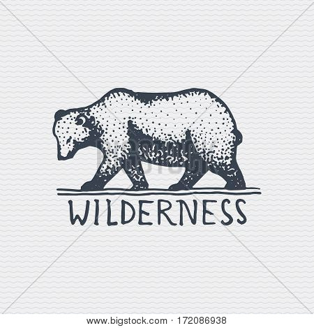 vintage old logo or badge, label engraved and old hand drawn style with wild grizzly bear.