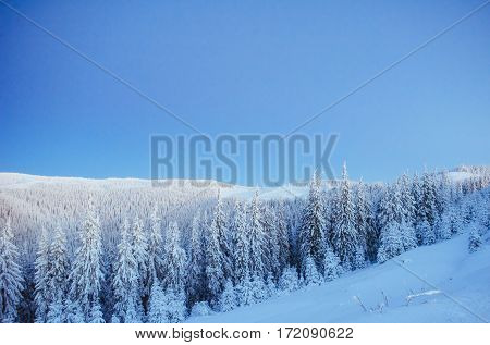 Mysterious winter landscape majestic mountains in winter. Magical winter snow covered tree. Dramatic wintry scene.  In anticipation of the holiday. Carpathian. Ukraine. Europe