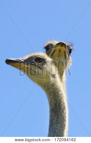 Photo of Ostrich Bird in Sunny Day