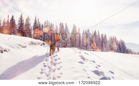 tourist is in winter mountains. Bokeh light effect, soft filter. Instagram toning effect. Carpathians, Ukraine, Europe
