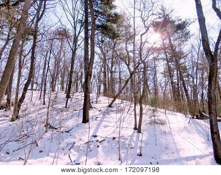 Winter High Park in Toronto Canada February 16 2017