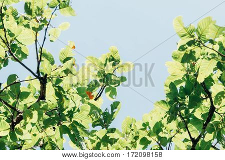 tree with green leaves on a summer day, retro tone bacground
