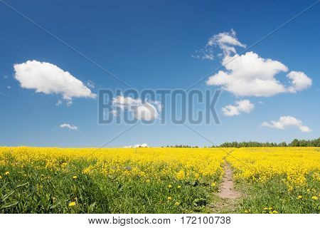 Spring field at beautiful day. Beautiful flowers field and blue sky spring.