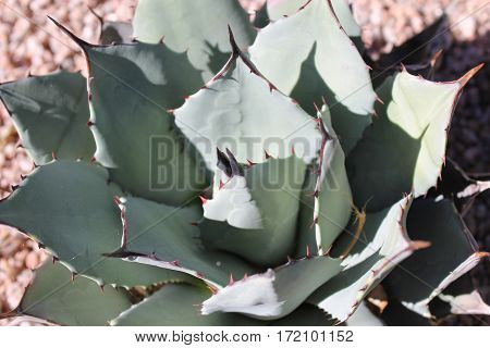 close up of small spiny green desert plant