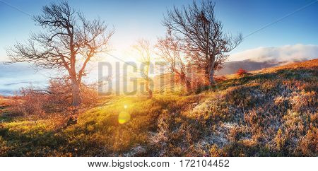 Fantastic sunlight in the morning. Fantastic fog in the mountains. October early winter days. Carpathian. Ukraine, Europe.