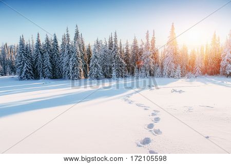 Fantastic winter landscape, steps, something leading into the mountains. Frosty sunny day in the mountains. In anticipation of the holiday. Carpathian, Ukraine, Europe. Happy New Year.