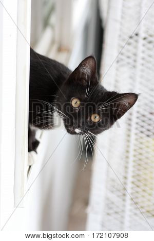 A curious cat shows surprise at what's on the other side of a window.