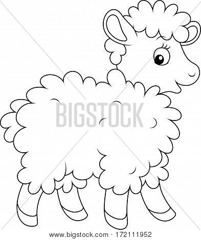Black and white vector illustration of a curly sheep walking