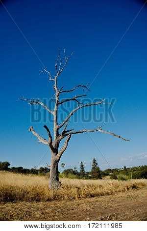 A withered tree with dried grass in summer