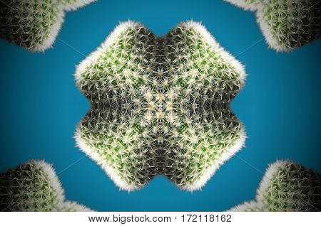 Abstract Cactus Reflection