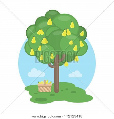Isolated pear tree with basket. Concept of harvest, fresh fruits and gardening.