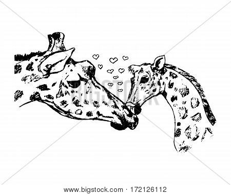 giraffe with cub vector illustration on white background