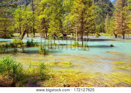 Flooded forest and wild river. Landscape view