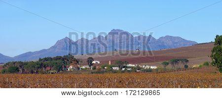 Grape Farm, Stellenbosch, Cape Town South Africa
