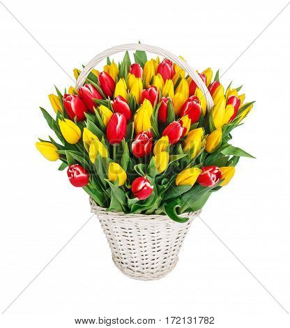 Bouquet of red and yellow tulips over white background