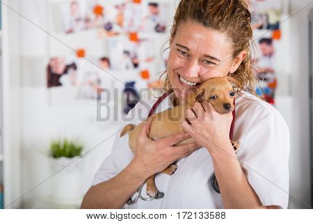 Veterinarian with a Chihuahua puppy undergoing medical checkup