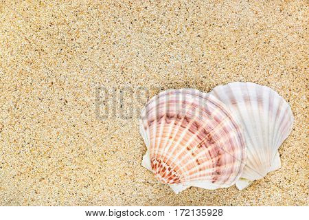Closeup of beautiful Scallop seashells on sand background with copyspace