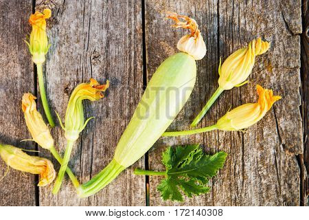 Fresh, Organic Flowers Of Zucchini On A Wooden Table,  Rustic Style.