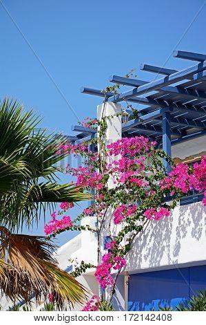 Pretty villa terrace with Bougainvillea Makrigialos Crete Greece Europe.