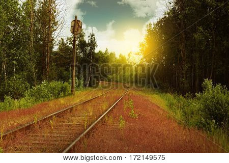 Abandoned railroad in the overgrown greenery area