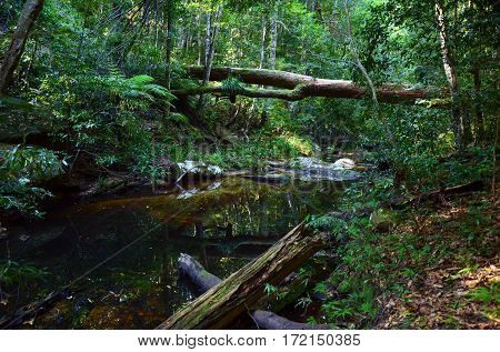 Tall, moss covered tree fallen over creek in temperate rainforest. Royal National Park, Sydney, Australia