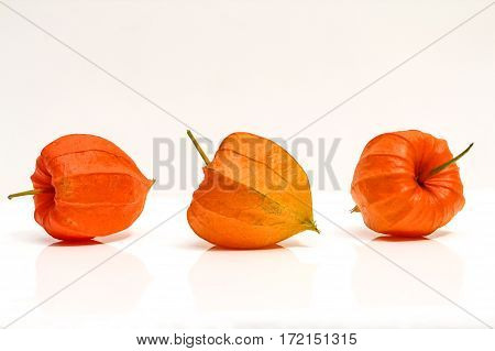 Blossom of a Lampion flower with white background, nature