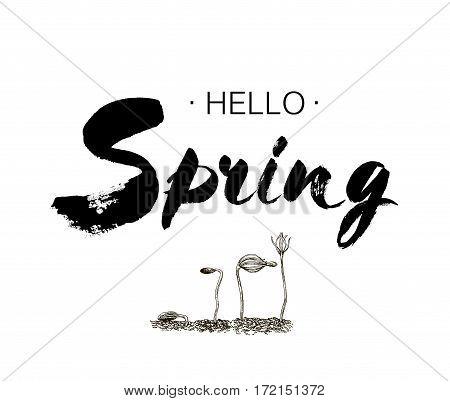 Phrase Hello spring Brush Pen lettering isolated on background. Handwritten vector Illustration. Handwritten modern brush lettering. Hand drawing elements design tree pine seedlings