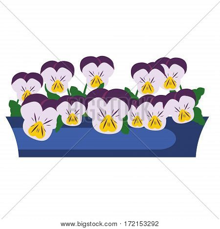 Pansy Garden Flowers in box. Vector illustration. Icon isolated design element